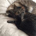 猫兄妹のビミョーな関係