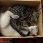 猫だより:箱篇