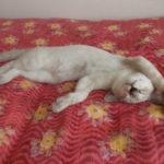 猫だより:寝相が…