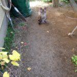 猫だより:後ろ脚麻痺、その後…