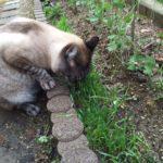 猫のサラダバー